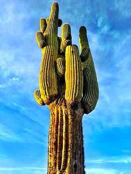 King Cactus by Barry Shereshevsky
