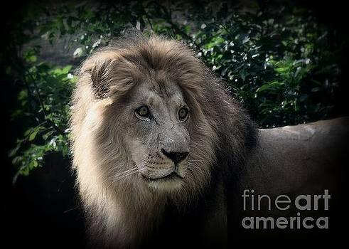 King Kamau by Lisa L Silva