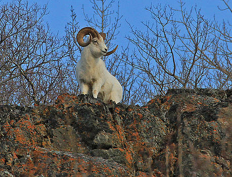King of the Mountain by Sam Amato
