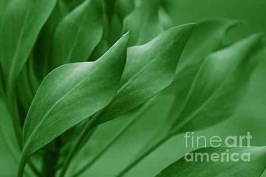 King Sugar Bush - King Protea - Leaves Green by Sharon Mau