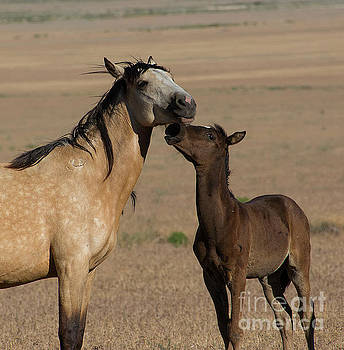 Kiss for Mom  by Nicole Markmann Nelson