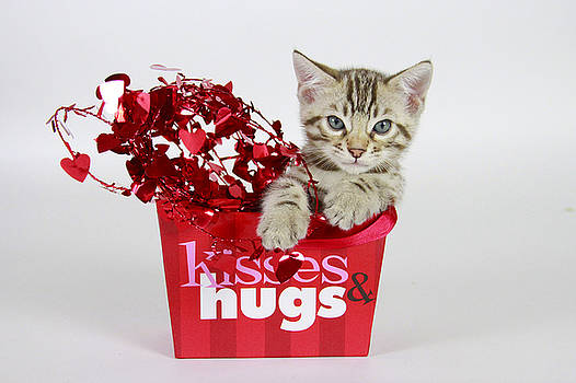 Kisses and Hugs by Shoal Hollingsworth