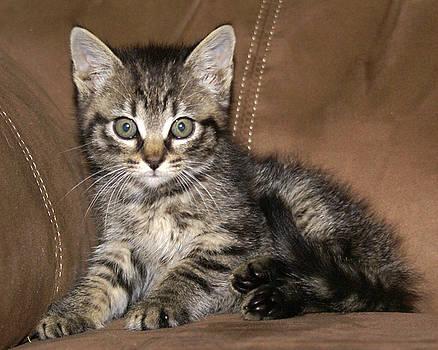 Kitten by D Winston