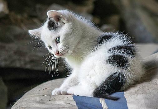 Kitten by Sophie De Roumanie