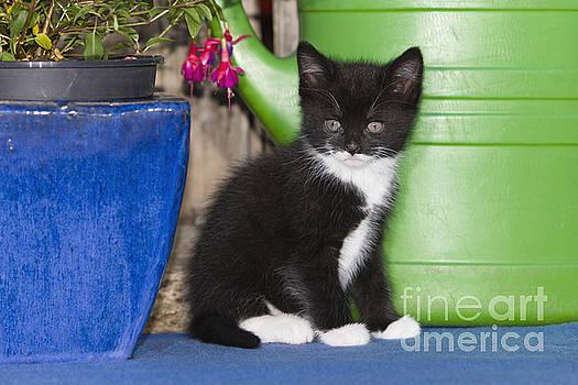 Duncan Usher - Kitten With Plant