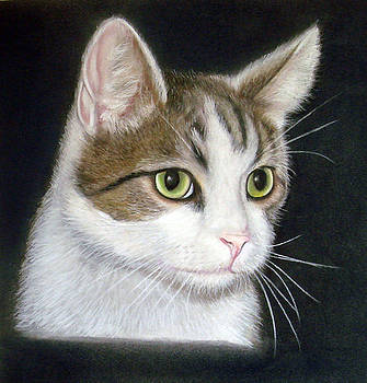 Kitty the Cat by Mary Mayes