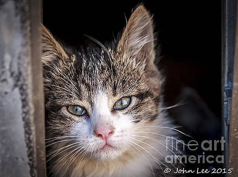 Kitty Whiskers by John Lee