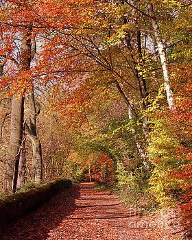 Knypersley in Autumn by Baggieoldboy