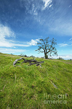 Charmian Vistaunet - Koa Tree and Hawaii Country Landscape
