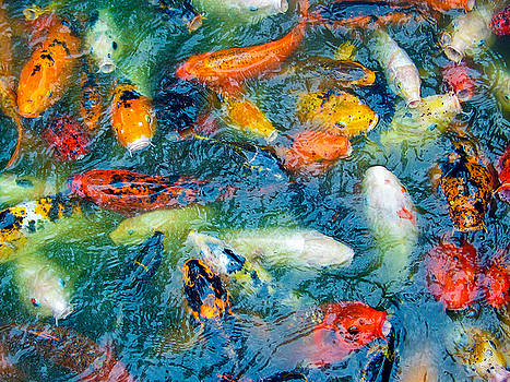 Koi Pond by Dan Lease