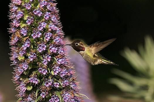Kolibri by Elka Lange