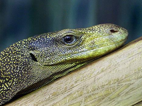 Jeff Brunton - Komodo Dragon 2