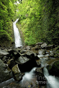 Ko'olau Mountain Waterfall by Charmian Vistaunet