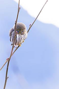 Kung Fu Owl by Windy Corduroy