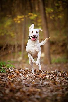 Labrador Frolics in Woodlands by Jane Melgaard