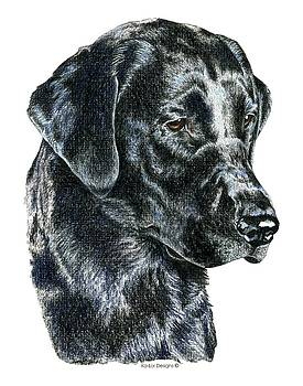 Labrador Retriever, Black Lab by Kathleen Sepulveda