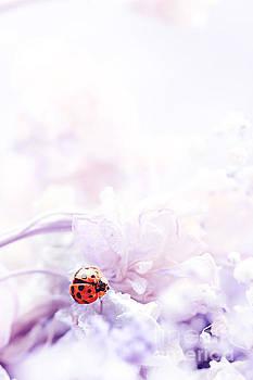 Lady Bug by Stephanie Frey