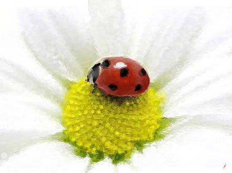 Ladybug on white daisy by Anthony Fishburne