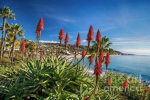 Laguna Beach Aloe Bloom by Mariola Bitner