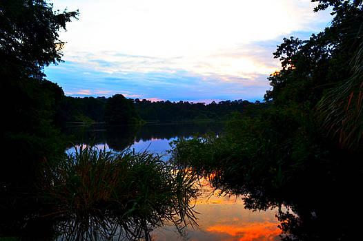 Lake Alice Dawn by Tammy  Shiver