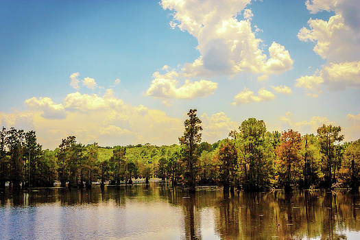 Barry Jones - Lake Bistineau Cypress