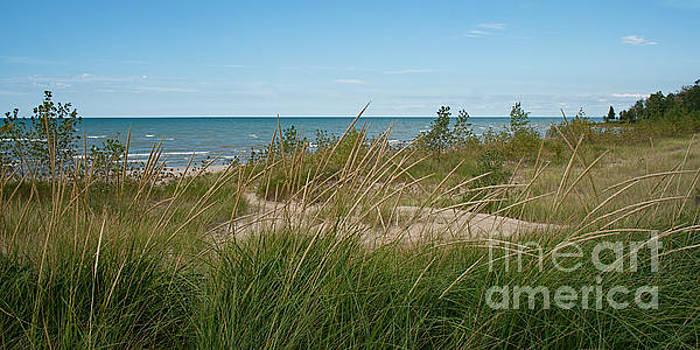 Lake Huron Sand and Grasses by Barbara McMahon