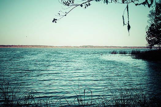 Lake Seminole by Debra Forand
