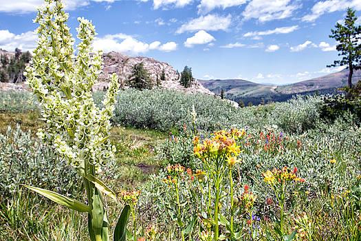 Lake Winnemucca Wildflowers - Carson Pass - California by Bruce Friedman