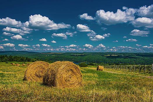 Lakeside Hayfield I by Steven Ainsworth