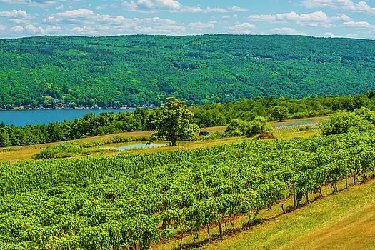 Lakeside Vineyard I by Steven Ainsworth