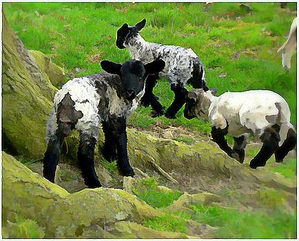 Lambs at Play by Mindy Newman