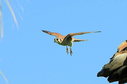 Landing Gear Down by Shoal Hollingsworth