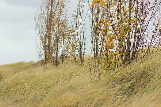 Landscape of Tiscornia Park by Tammy Chesney