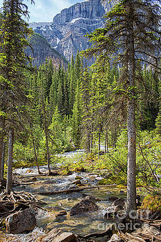 Landscape Rocky Mountains by Patricia Hofmeester