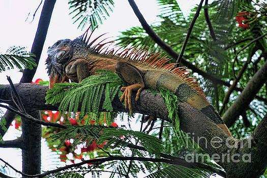 Chuck Kuhn - Large Iguana