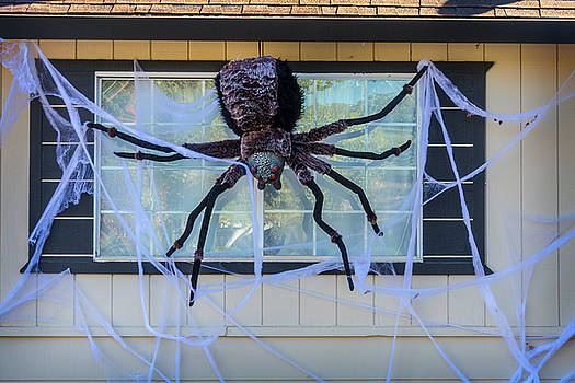 Large Scary Spider  by Garry Gay