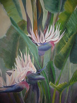 Large White Bird of Paradise Plant by Eve Corin