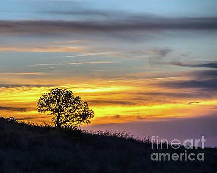 Las Cruces Sunset by Steve Whalen