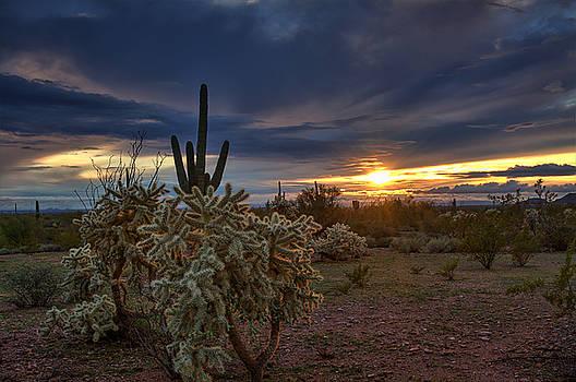 Saija  Lehtonen - Last Light in the Sonoran Desert