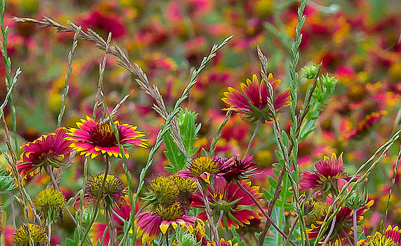 Last Of The Wildflowers by Bob Marquis