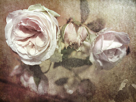 Last Rose of Summer by Margaret Hormann Bfa