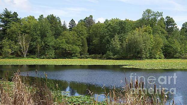 Late August at Cedar Pond by Marcel  J Goetz  Sr