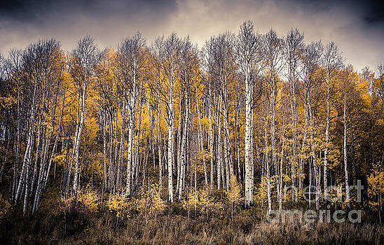 Late Fall by The Forests Edge Photography - Diane Sandoval