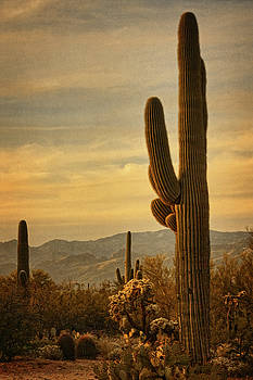 Late light 0n Saguaro txt by Theo O'Connor