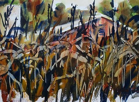 Late Summer Corn by JULES Buffington