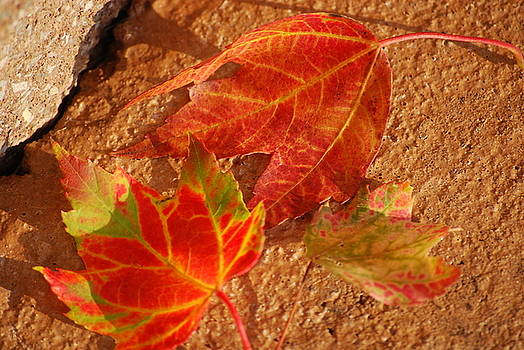 Late Summer Fall by Peter  McIntosh
