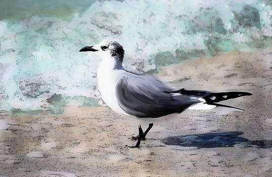 Laughing Gull Art by Barbara Chichester