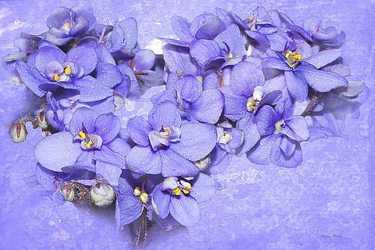 Lavender African Violets by Phyllis Denton