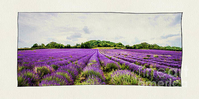 Lavender Fields. by ShabbyChic fine art Photography