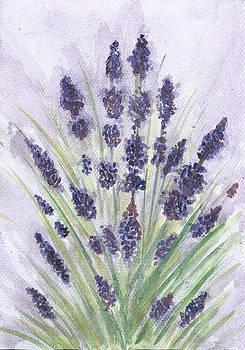 Lavender by Karolina Wicha